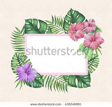 Border Designs For Birthday Cards Beautiful Border Frame Tropical Hibiscus Flowers Stock