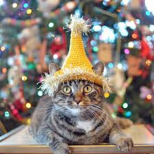 Cat Instagram Cats U0026 Dogs Of Instagram Prepare For The Holidays