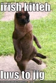 Sexy Monkey Meme - master marf caturday sexy irish dance
