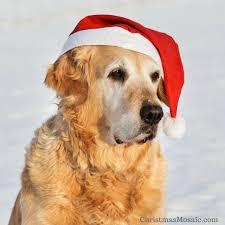 dog christmas ornaments by breed christmas mosaic