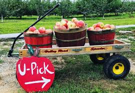 apple season is upon us pick your own orchards within 2 hours of