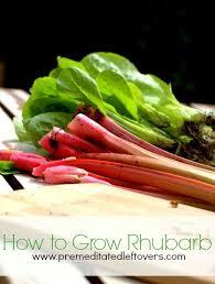 best 25 rhubarb plants ideas on pinterest growing rhubarb how