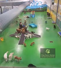 Hotel Ideas Best 25 Pet Hotel Ideas On Pinterest Dog Hotel Pet Resort And