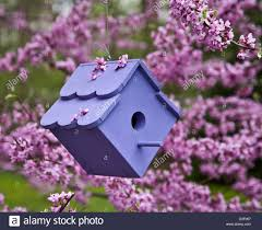 close up blue birdhouse in a redbud tree in new jersey usa stock