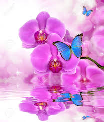 beautiful purple orchid with butterflies morpho reflection on
