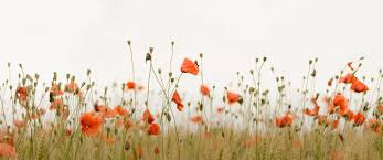 thanksgiving stat holiday why remembrance day should continue to not be a holiday in ontario