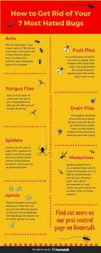 Best  How To Get Rid Of Gnats Ideas On Pinterest Fruit Flies - Small flies around kitchen sink