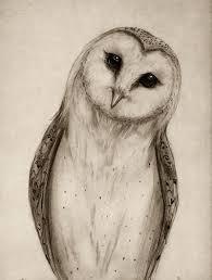 drawn owl sketch pencil and in color drawn owl sketch