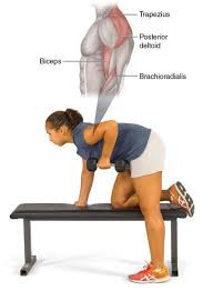 Dumbbell Exercises On Bench Fitness For Life Sixth Edition Free Weight Exercises