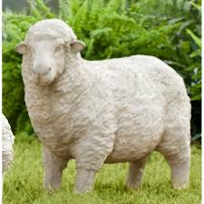 238 best sheepish images on sheep and goats