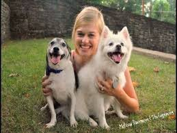 american eskimo dog short hair american eskimo dog breed top 10 amazing facts about american