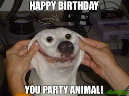 Birthday Animal Meme - happy birthday meme dog 66896 memeshappen