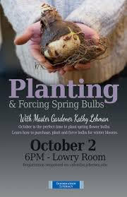 planting and forcing spring bulbs with master gardener kathy