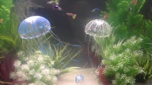 Jellyfish Home Decor by Jbl Medusa Fish Tank Jelly Fish Decoration Youtube