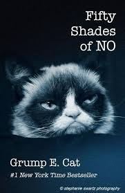 Grumpy Cat New Years Meme - 277 best grumpy cat images on pinterest grumpy cat grumpy cats