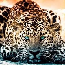 5d diamond painting quiet leopard animal diamond cross stitch diy
