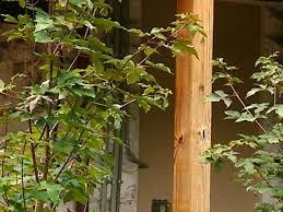 Small Urban Garden - plants for a small urban garden diy