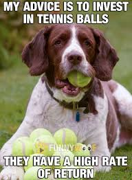 High Dog Meme - if you are a dog and you love balls investing in tennis might be