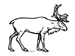 coloring pages reindeer coloring sheet reindeer antlers