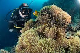 padi master scuba diver trainer u2013 divers down uae