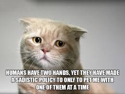 Sad Kitty Meme - this sad kitty imgur