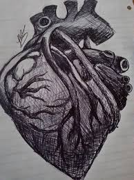 my sketch of a human heart by ponta2244 on deviantart