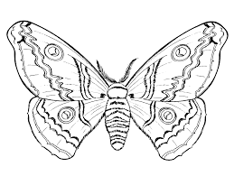 insects coloring pages butterflies and 24gif coloring pages