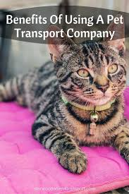 Pet Ready Exterior Doors by Best 25 Pet Transport Ideas On Pinterest Dog Transport
