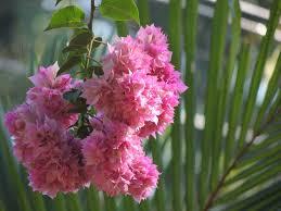 Flower Companies Summer 2017 Guide To Flowers U2013 Flowertoy