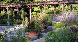 buy rock garden plants online at greenwood nursery