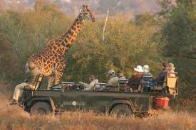 african safari car euromic walthers destination business solutions south africa