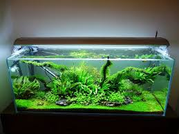 Planted Aquarium Aquascaping Pin By D On Aquascaping Pinterest Aquariums Aquascaping And