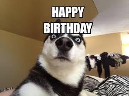 Funny Animal Birthday Memes - funny animal meme happy birthday