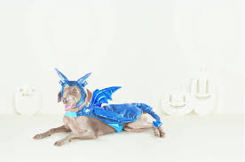 spirit halloween little rock 10 halloween costume ideas for kids u0026 their pets that you u0027ll be