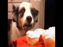 I Got My Eyes On You Meme - epic dog i got my eyes on you youtube