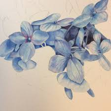 Shades Of Blue Paint by Blue Hydrangea Paintings U2014 Helen Shideler Cspwc