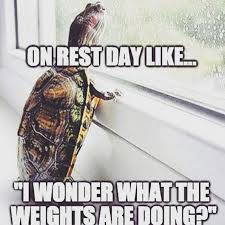 Gym Rest Day Meme - 480 best fitness health humor images on pinterest gym humor gym
