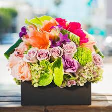 multi colored roses garden box in manhattan ca growing