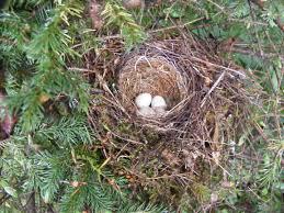 bird nesting in nc wake audubon