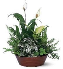 indoor plant arrangements white garden by petals stems in dallas tx petals stems florist