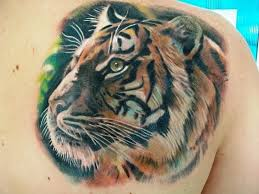 beautiful tiger on shoulder blade tattooimages biz