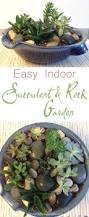 How To Create A Rock Garden by Best 25 Succulent Rock Garden Ideas Only On Pinterest