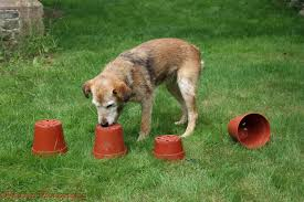 The Bathroom Game by Dog Playing Flowerpot Treat Seek Game Photo Wp26117