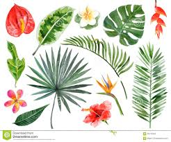 Tropical Plants Pictures - hand drawn watercolor tropical plants download from over 52
