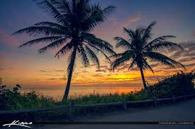 palm tree at jupiter island florida