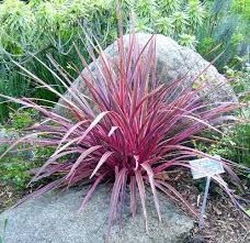 how to prune ornamental grasses grasses gardens and landscaping