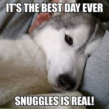 Best Day Ever Meme - this girl has to be the most snuggly dog gone to the snow