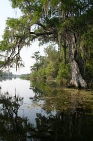 Florida rivers images Wacissa river wikipedia jpg