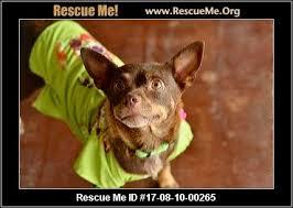 Bench Kelpie Puppies Sale Texas Australian Kelpie Rescue U2015 Adoptions U2015 Rescueme Org