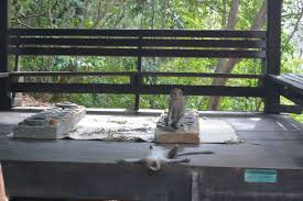 Monkey Bench 8 Memorable Experiences In Ethnically Diverse Malaysia